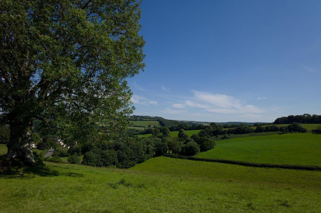 Fields near Bampton village